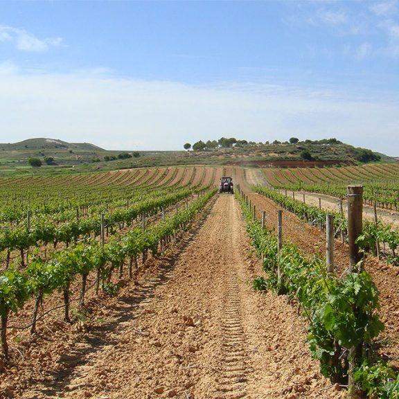 cepas-tudanca-vino-ribera-del-duero